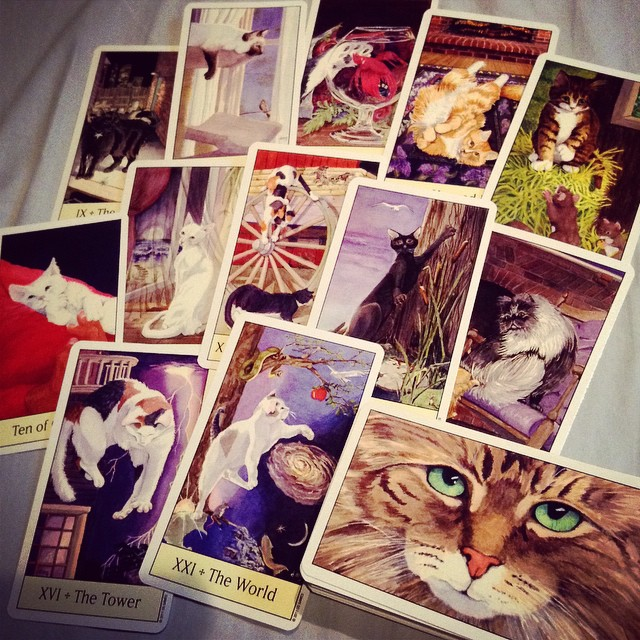 Cats Eye Tarot 4