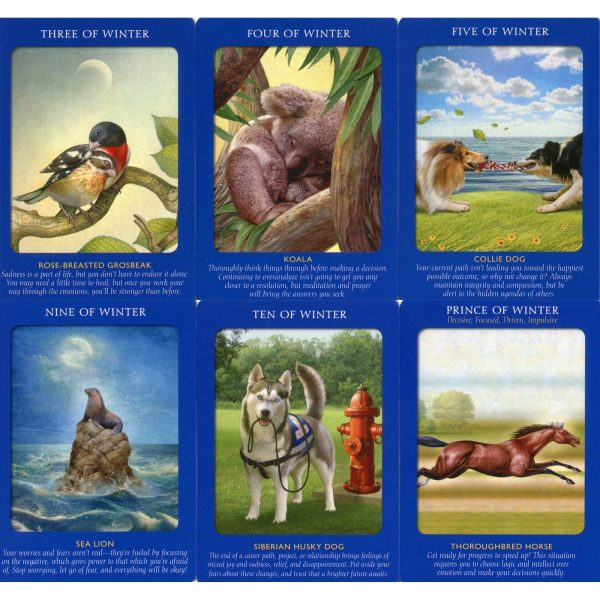 Animal Tarot Cards 5