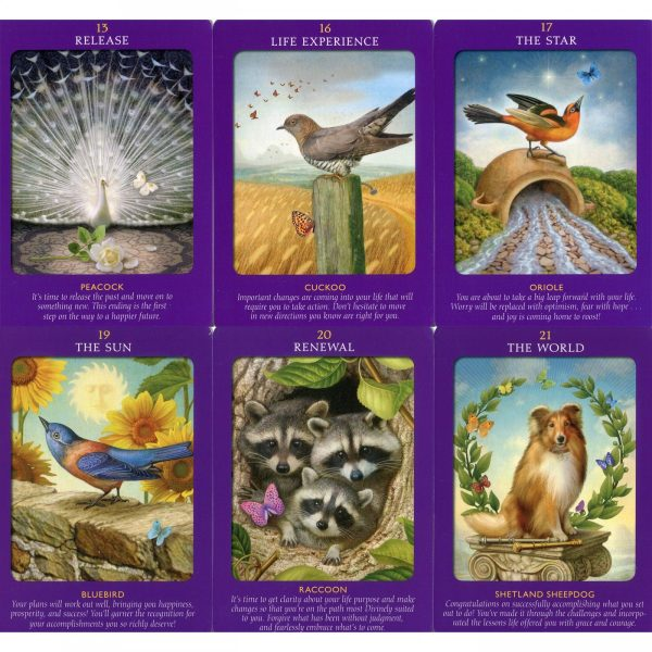 Animal Tarot Cards 8